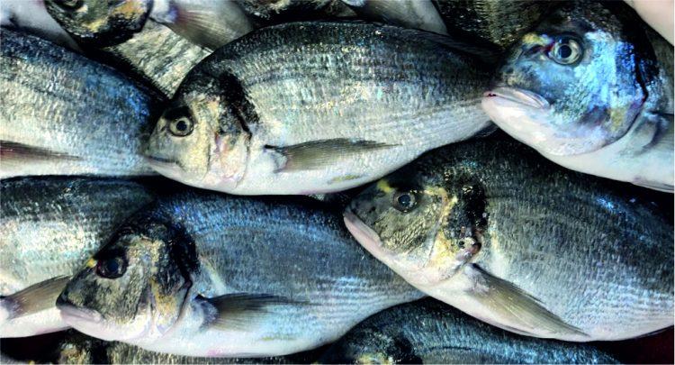 Hangi Balık Hangi Mevsimde Yenir Bölüm 2